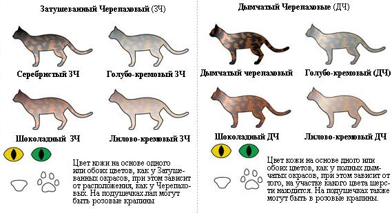 окрасы кошек классификация фото